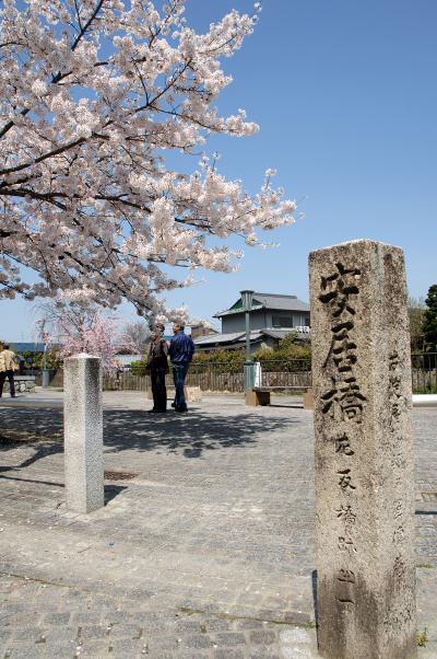 ③放生川のさざなみ公園の桜色々