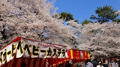 大宮公園の花見 手の平サイズのデジカメ編