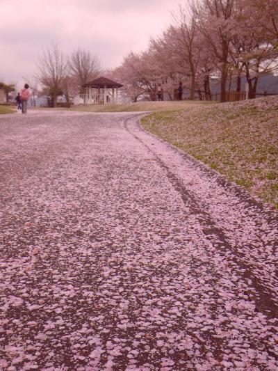 桜吹雪散る湖畔に子供たちの将来を想う/エネルギーを制する者はーーー(宮ケ瀬湖にて)