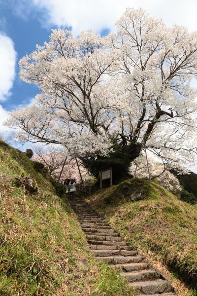 佛隆寺の望月桜 ~奈良:宇陀の桜巡り 2012 Part2~