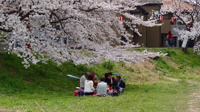 北越谷元荒川堤の桜並木最北端部の観桜と昼食