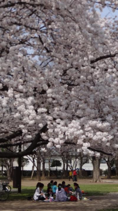 東越谷第二公園で花見