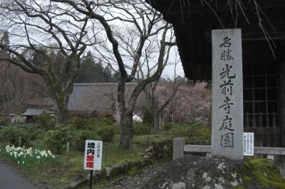 2012年 信州・北陸8大さくらめぐり ⑧光前寺 しだれ桜