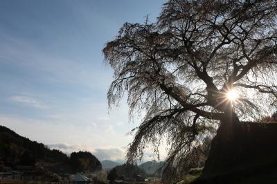 又兵衛桜 ~奈良:宇陀の桜巡り 2012 Part1~