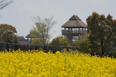 20120412 吉野ヶ里公園を散策しましょ