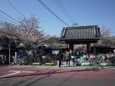 金沢文庫の 称名寺 で、ちょっとお花見