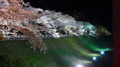 水戸市 夜桜の観桜 三の丸歴史ロード