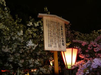 2012年の桜を見に☆