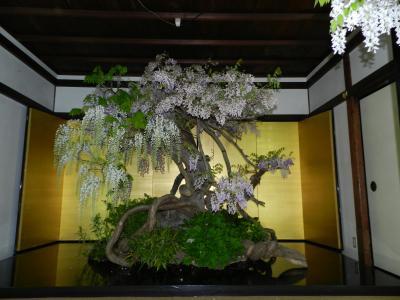 『盆藤展』って初めて見ました!◆奈良市・国際奈良学セミナーハウス(旧・世尊院)