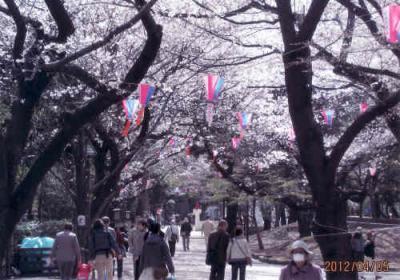 東京の滝野川・飛鳥山の桜・渋沢史料館