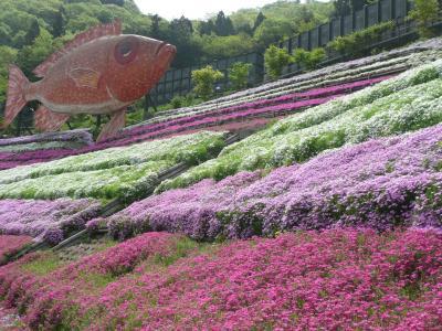 お花のじゅうたん・芝桜の小道