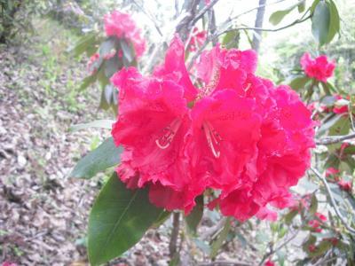 播州山崎花菖蒲園とよい温泉