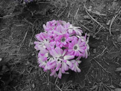 春の韓国2012 ⑤ 加平・楊平郡・横城郡・驪州郡