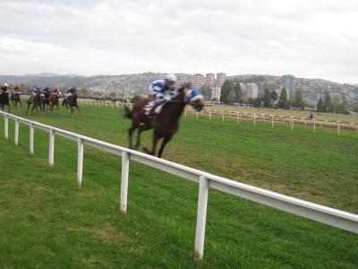 2012チリ バルパライソ競馬 といっても競馬場はビーニャにあります