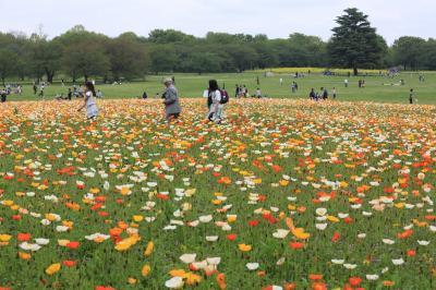 昭和記念公園 春 2012 ~昭和記念公園ファン倶楽部オフ会~
