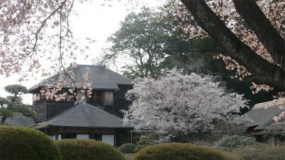 水戸偕楽園の桜と石岡・土浦の桜めぐり