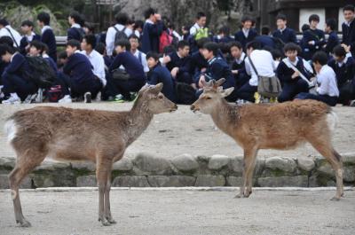 春の奈良公園・日本の世界遺産「興福寺&東大寺」