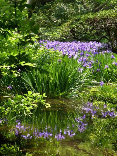根津美術館の初夏の庭園散策