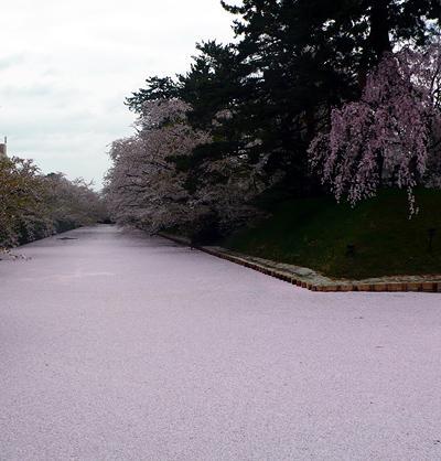 春の帰省2012 弘前~散りゆく桜&元弘大生に*だけ*なつかしい場所めぐり