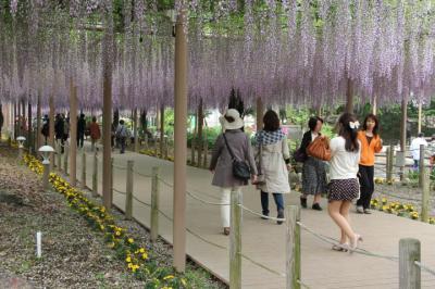 愛知・曼陀羅寺の藤祭り