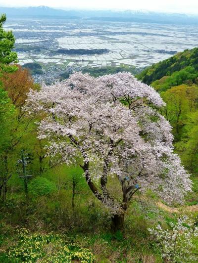 2012/05/02 乗りテツの旅:弥彦観光&えちごツーデーパスを使って②