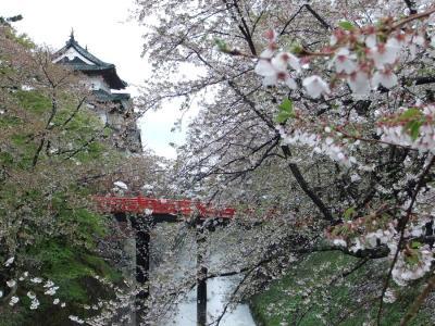 今年の桜の見納めは弘前で。