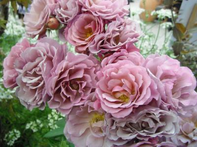 国際バラとガーデニングショウ(その2)