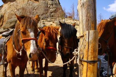 大草原で乗馬三昧@モンゴルの旅②11年ぶりの乗馬体験