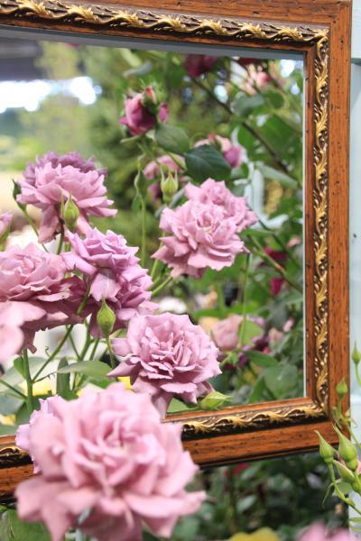 ますますロマンチックになる国際バラとガーデニングショウ2012(1)バラを使ったロマンチックな楽しみ方───天使が舞い降りるローズアベニューや和洋折衷のバラの楽しみ方&特別展示のベルサイユのバラ等