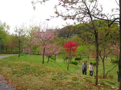 造幣局の通り抜けと醍醐の葉桜(11)大阪・藤田庭園。