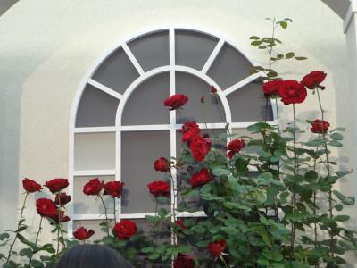 国際バラとガーデニング展 その2 2012