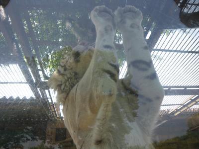 東武動物公園のカバ ~2012年春~