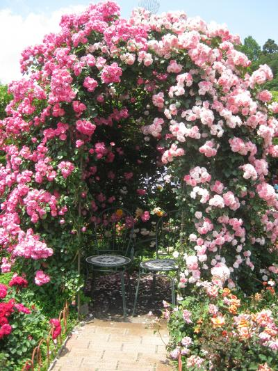 深大寺植物園の薔薇