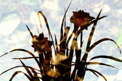 花しょうぶフェスティバル 「城北菖蒲園」