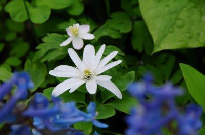 【300冊記念】春の妖精舞う北海道へ【2】~嵐山公園で春を満喫~