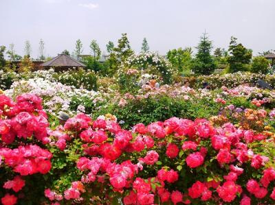花菜ガーデン ~Rose Festival 2012 春~