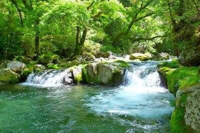 新緑に映える菊池渓谷