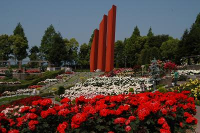 荒牧バラ公園(伊丹市)&農業公園(尼崎市)のバラ
