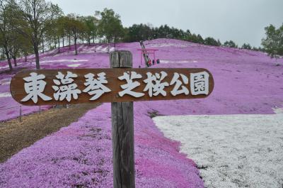 春の北海道*その2*「東藻琴の芝桜と上湧別のチューリップ」