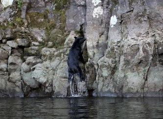 新緑の十和田湖・奥入瀬渓流  そしてボートで行く遺跡・洞窟探検ツアー