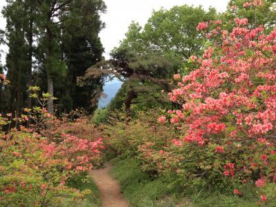 ツツジの咲き誇る関八州見晴台