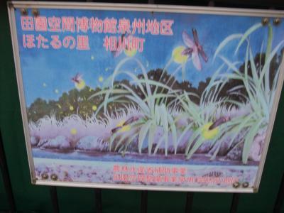 人魂じゃないよ、蛍だよー in岸和田市相川町での、ふわっとした蛍