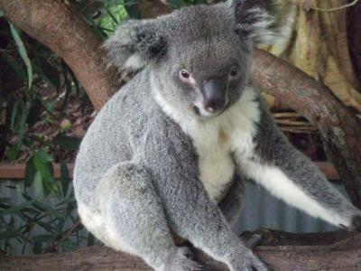 20代女二人旅☆オーストラリア-コアラとラピュタと碧い海、ケアンズ-