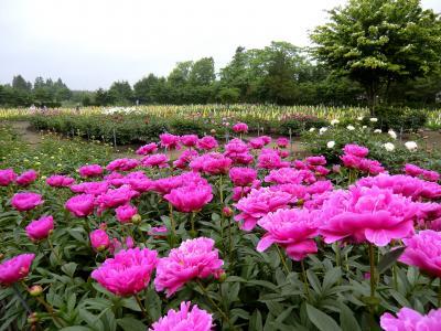 青森県 十和田市 ~鯉艸郷(りそうきょう)にて花々を観賞~