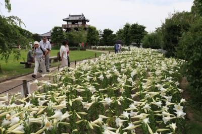 立てばシャクヤク、座ればボタン、歩く姿はユリの花 「池田城跡公園」