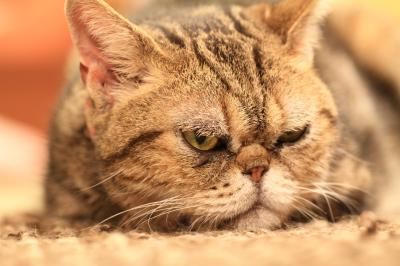 【猫カフェ55】 生まれては死ぬるなりけりおしなべて 釈迦も達磨も猫も杓子も 「猫の時間」