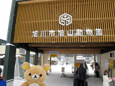 北海道冬のイベント周りしてくるクマ~ in旭山動物園①