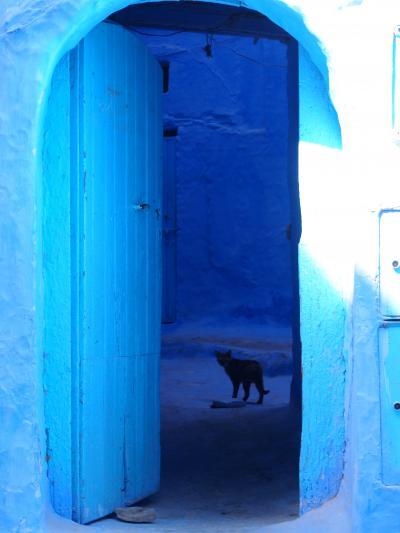 サハラ砂漠を目指してモロッコ一人旅 番外編*・゜・*猫 ネコ ねこ*・゜・*