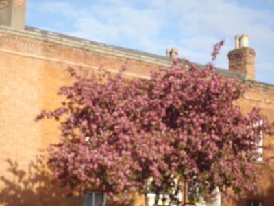 ダブリンの桜と町のようす