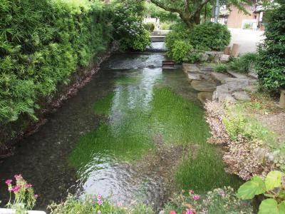 滋賀県米原の梅花藻と名水と秘仏そして美しい庭園